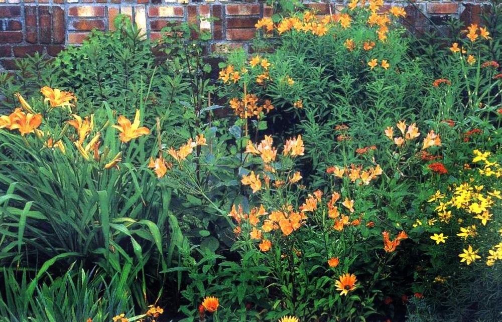 Защита растений от жары - тень от забора или стены дома