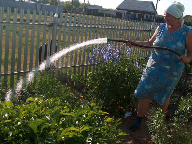 Полив растений должен производится только в утренние и вечерние часы