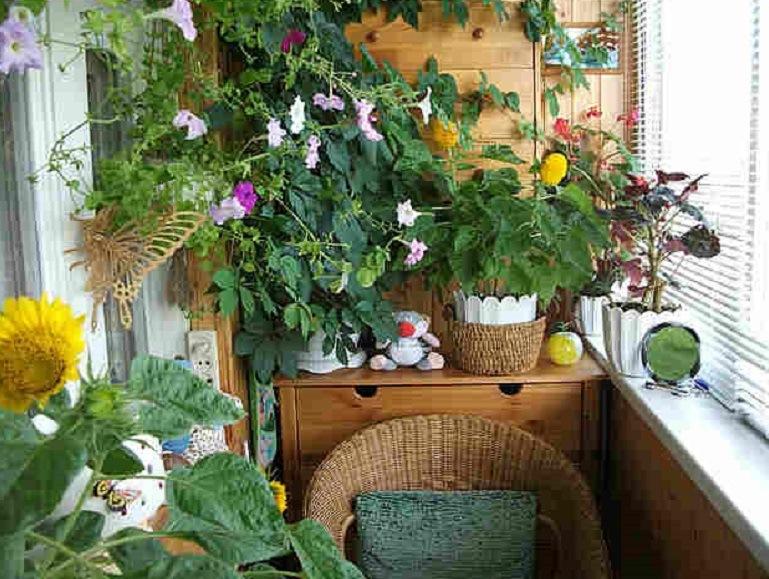 Зимний сад на балконе: советы по устройству.