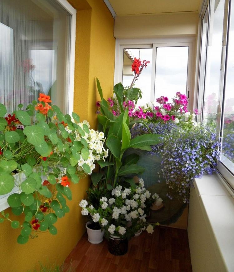 Какие цветы можно выращивать на балконе в настенных горшках?