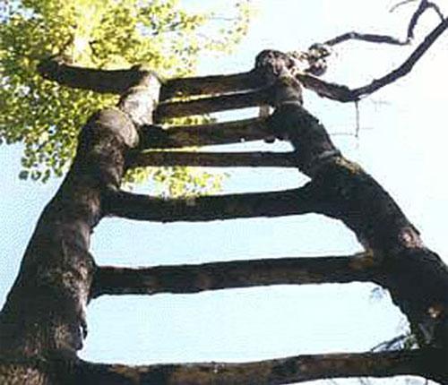 Экзотическая лестница