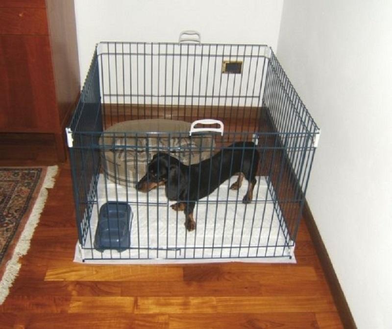 Вольер для собаки в квартире: как сделать своими руками и как приучить четырехлапого друга