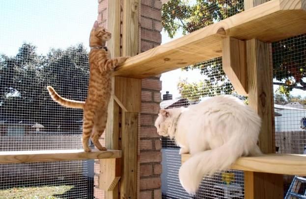 Клетки для кошек: большие выставочные клетки для котов, особенности переносок и ловушек. Как выбрать?