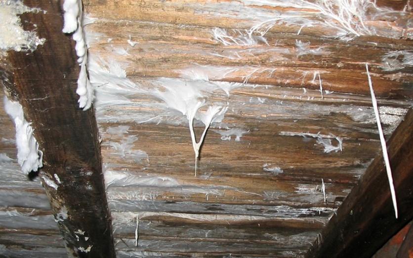 сырость в подполье деревянного дома
